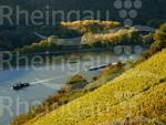 Weinbergslandschaft zwischen Rüdesheim und Assmannshausen im Herbst