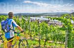 Fahrradfahrer in den Weinbergen