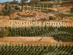 Rüdesheimer Rottland